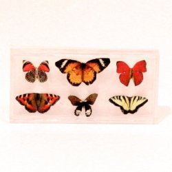Butterfly Box - Small